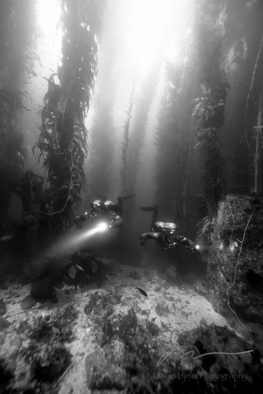 Divers in Kelp
