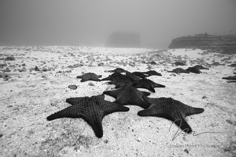 Seastars Horizontal