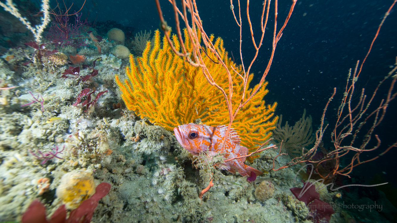 Gorgonian and Fish