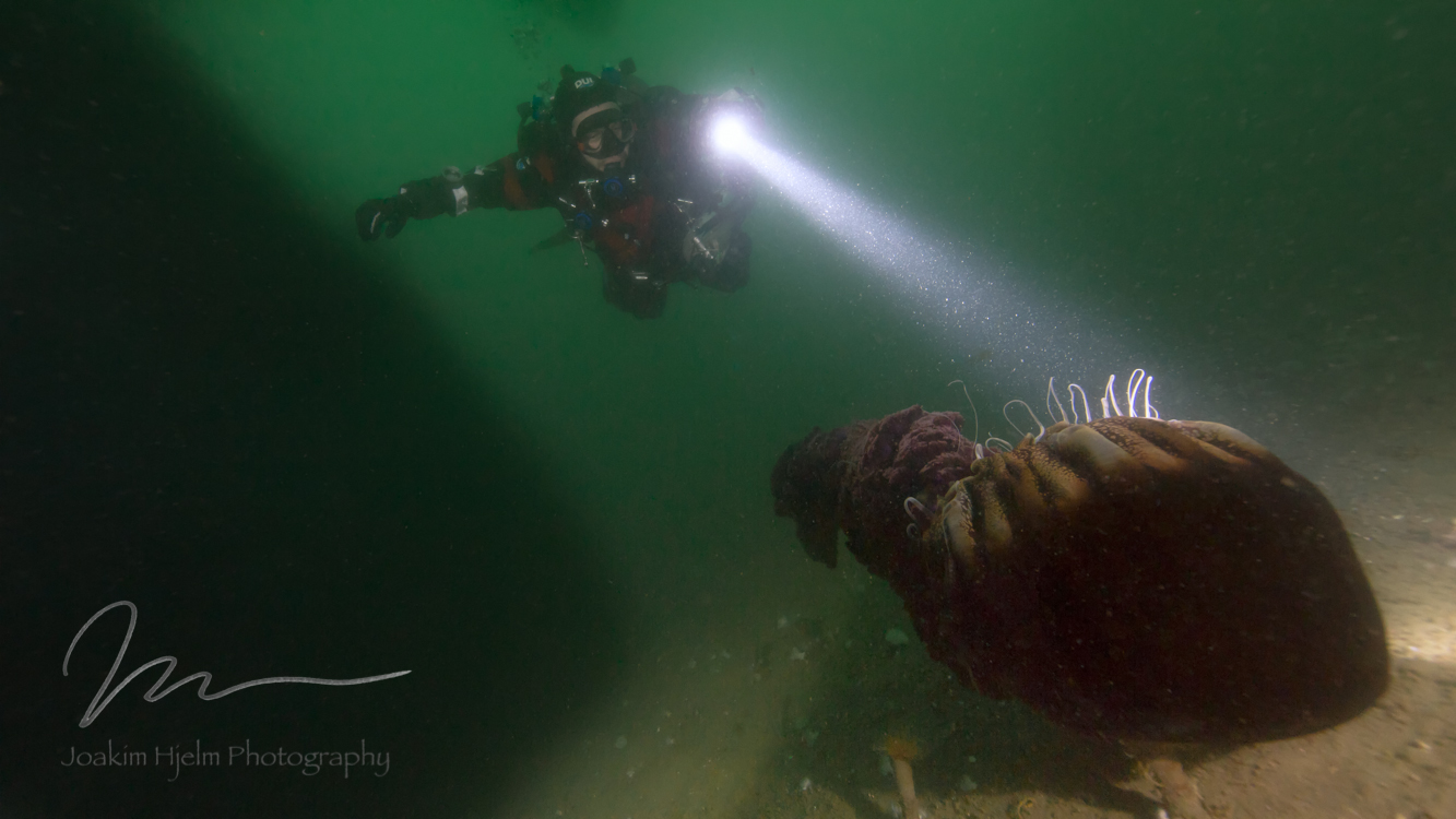 Diver and Sea Nettle