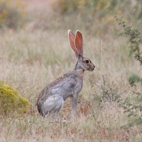 Weekly Wildlife: Rabbits