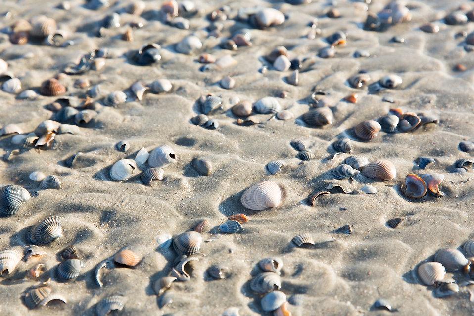 Muscheln_im_Sand_1_Zimmervermittlung_Las