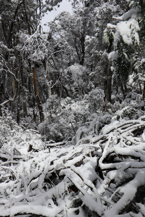 Snow Covered Bush - Low Res.png