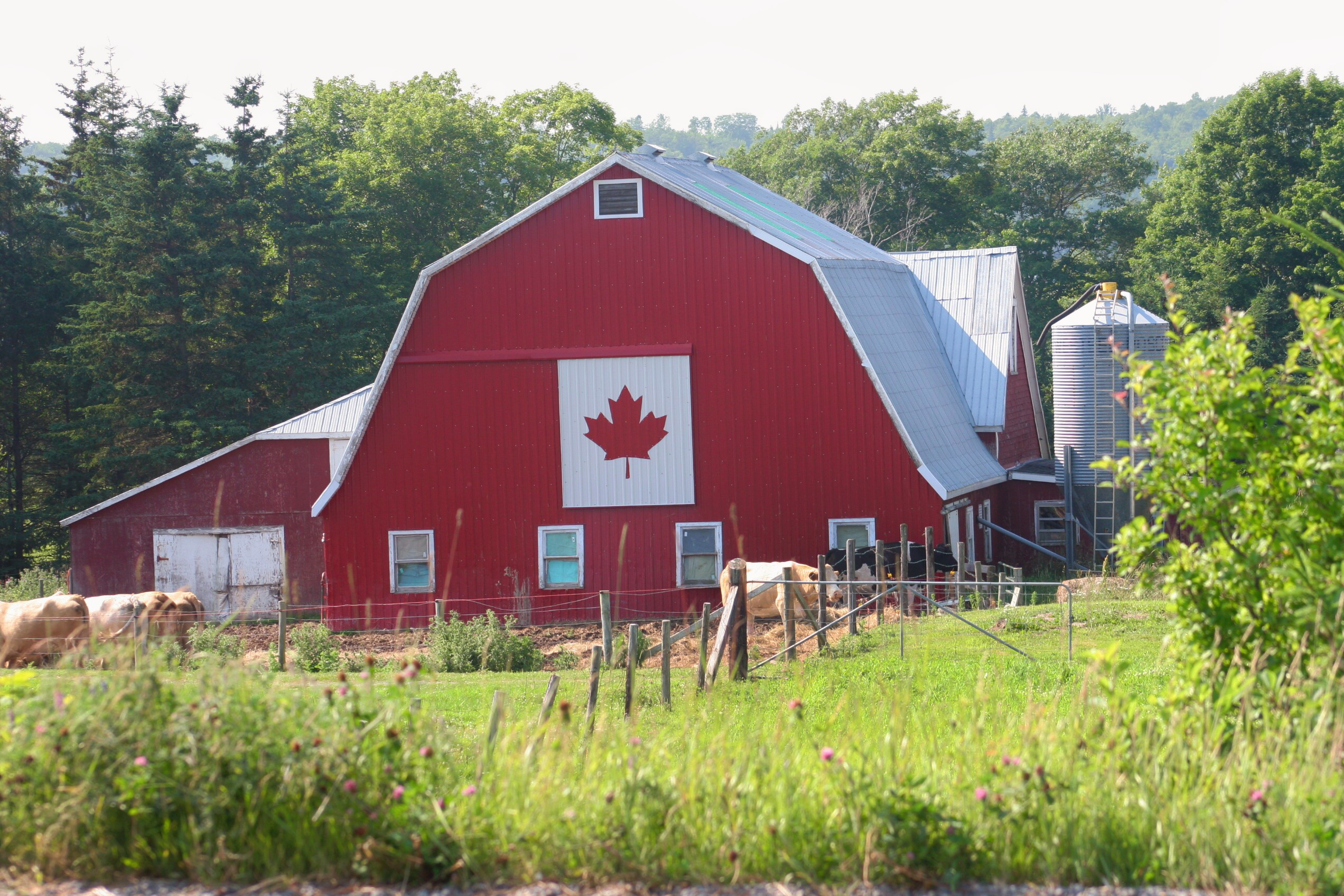 Nova Scotia Barn