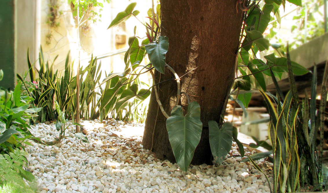 Jardim sob Jatoba