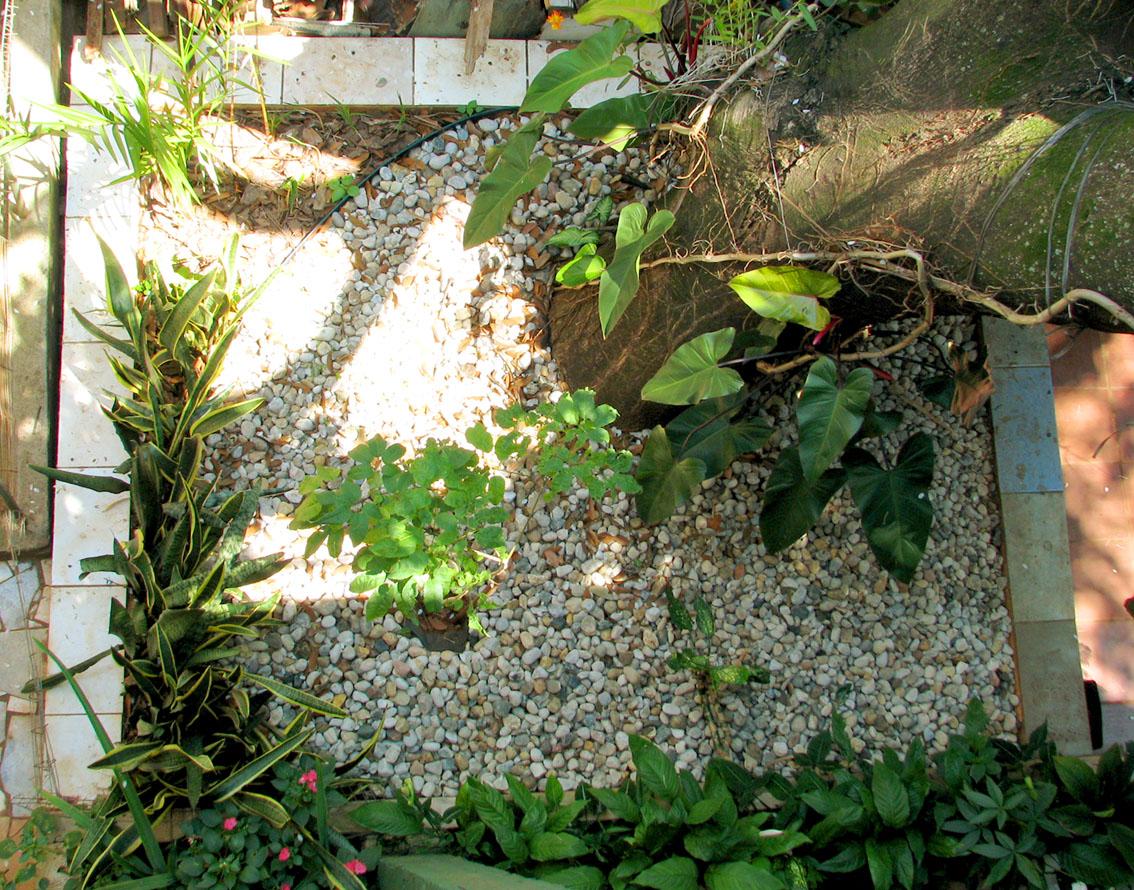 Jardim Jatoba