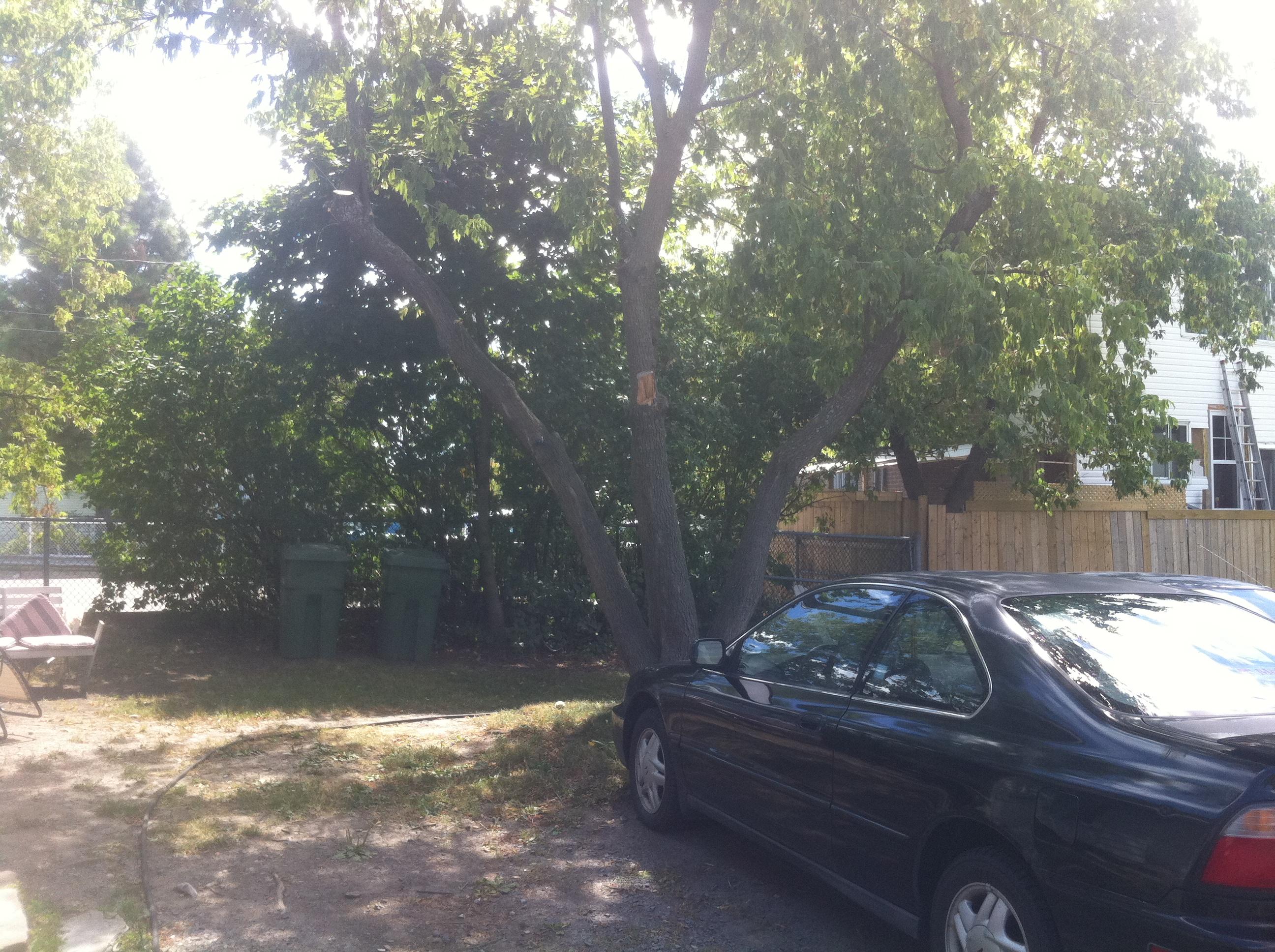 backyard2 (2)