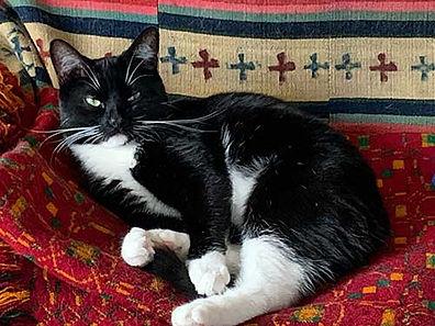 shirins-cat.jpg