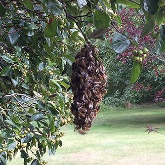 9th-bees.jpg