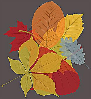 leaves).jpg