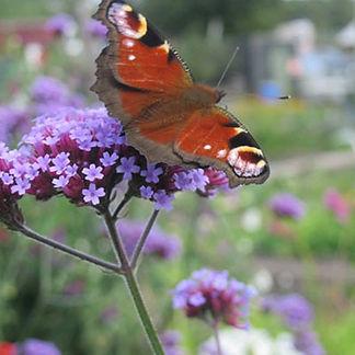 butterfly-29-8.jpg
