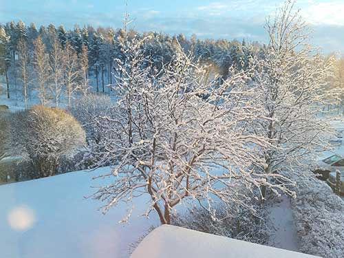 winter-sweden.jpg