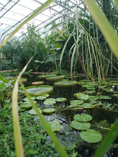 botanic-gardensb.jpg