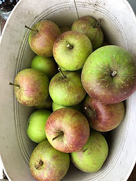 27-apples.jpg