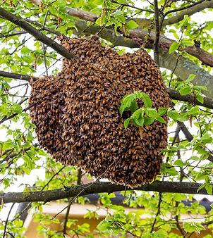 swarmb.jpg