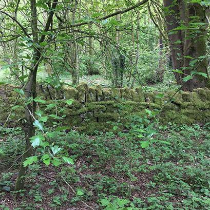 woodsb.jpg
