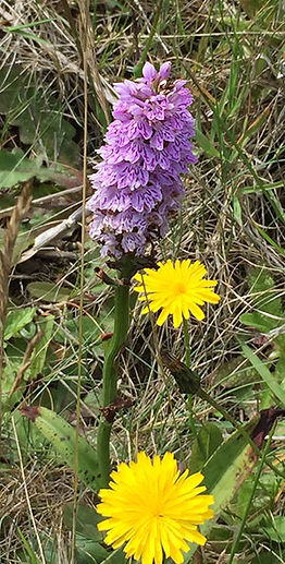 wild-orchid.jpg