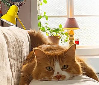 catb.jpg