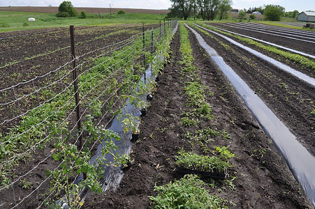Example row from Iowa gardening for good