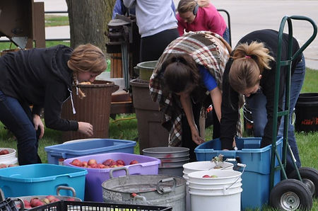 church youth group volunteers sorting apples for cider