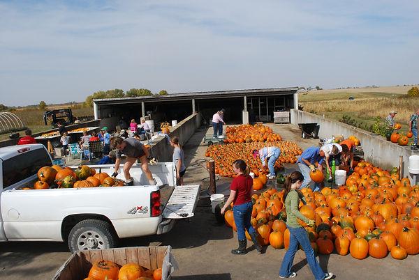 Volunteers preparing for pumpkin fundraiser