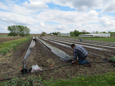 example of irrigation at Iowa Gardening for Good