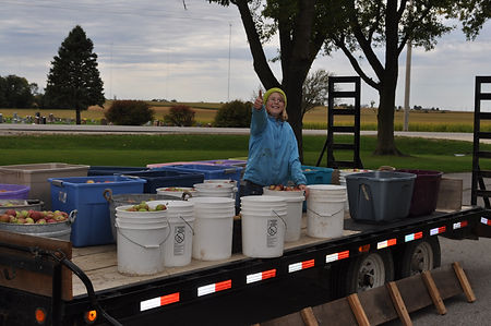 Iowa gardening for good example of apples for pressing cider
