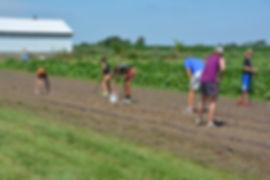 Iowa Gardening for Good volunteer example