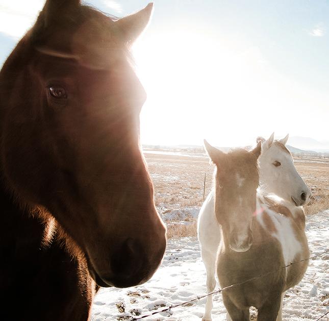 Bridger Horses1