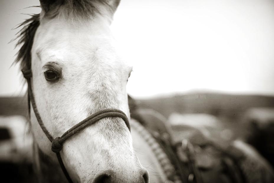 Branding White Horse