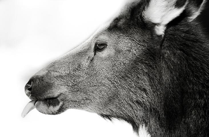 Yellowstone-334