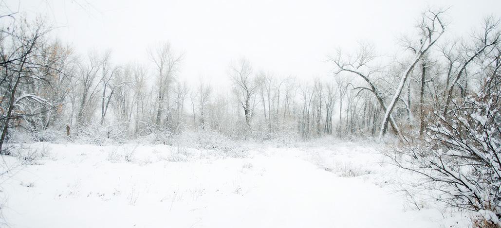 Winter Trees-26