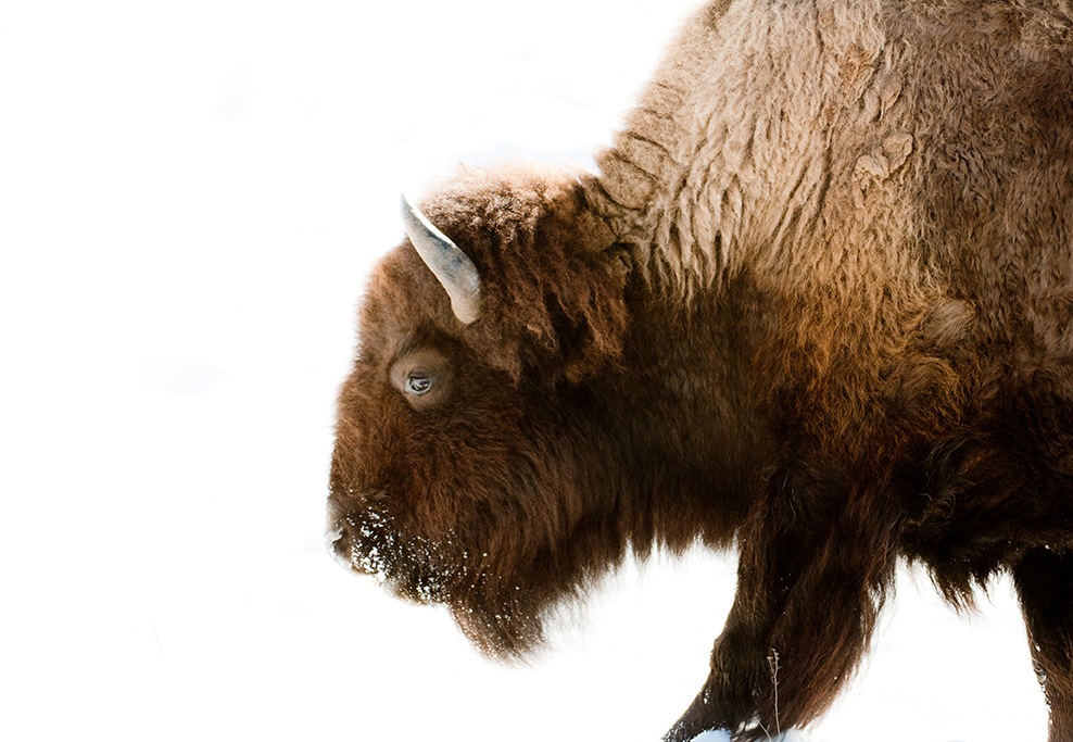 Yellowstone-362