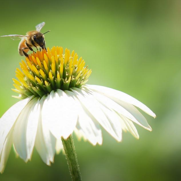 Bee & Daisy