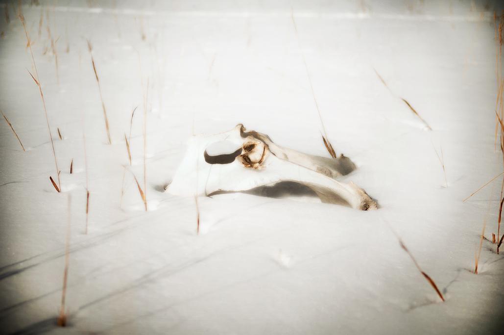 Bridger Skull-169