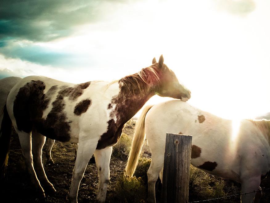 Wyoming Horses-955