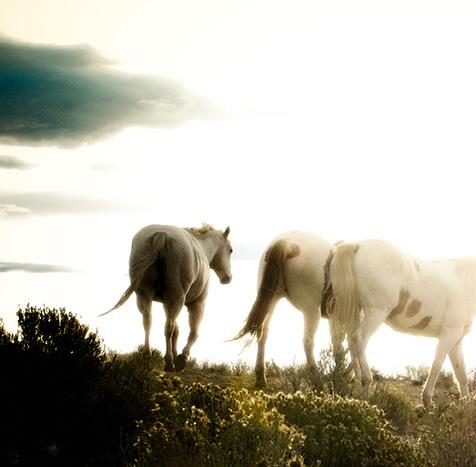 WyomingHorses-965