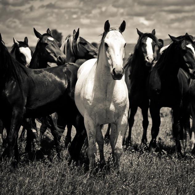 Crow Horses