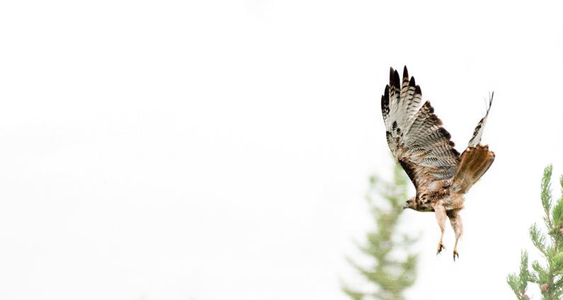 Hawk-111