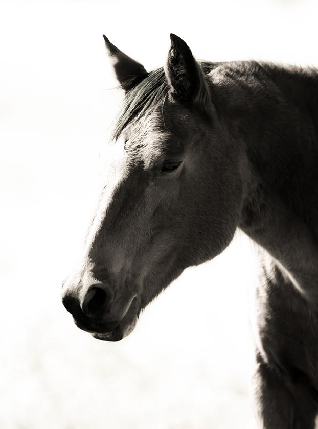 E.Rosebud Horse-12