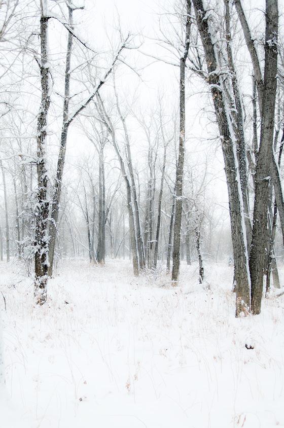 Winter Trees-31
