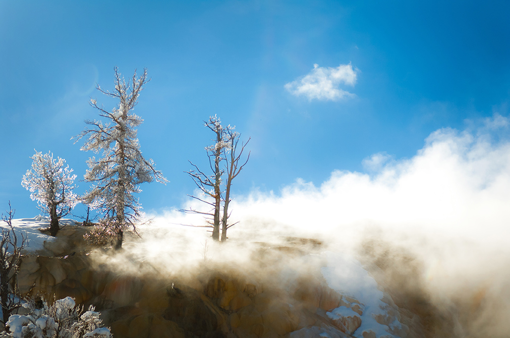 Yellowstone-239