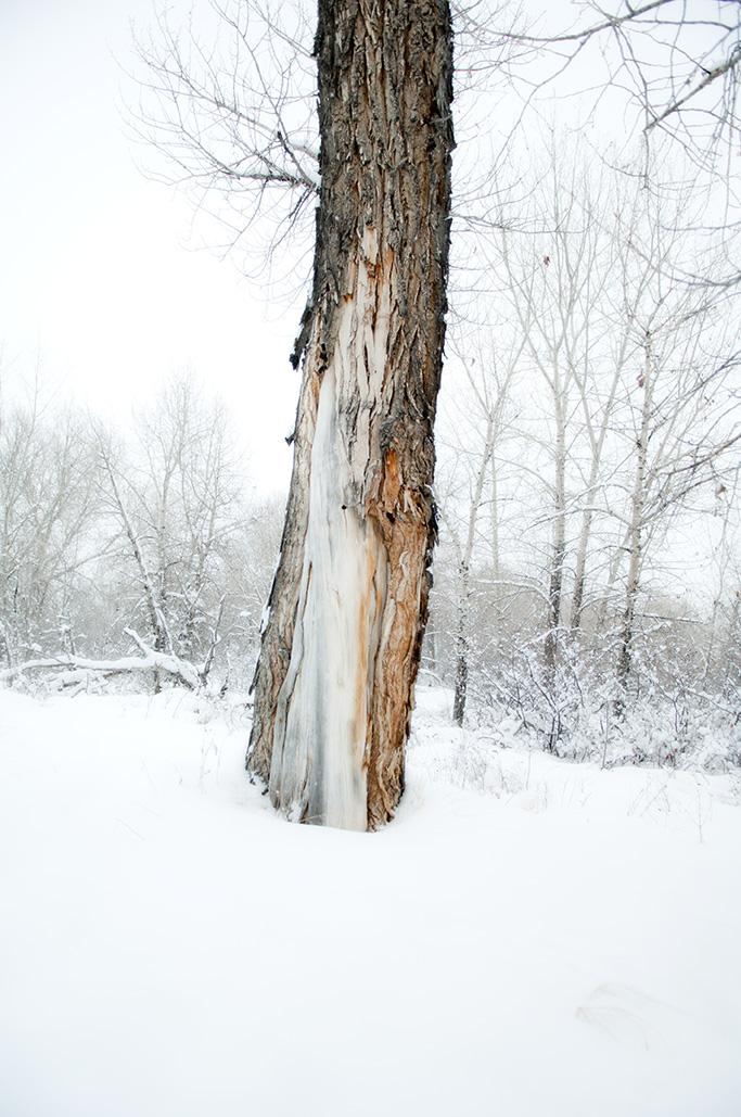 Winter Tree-24