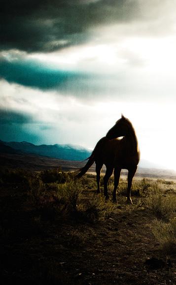 WyomingHorse-957