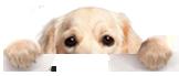 dog_peeking.png