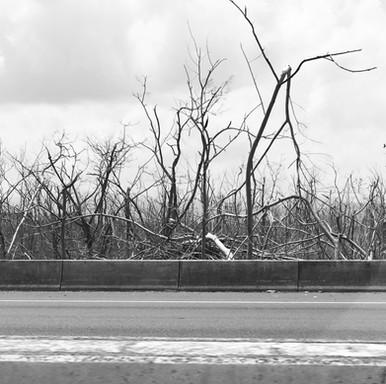 Common Landscape after Hurricane Maria