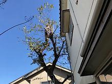 IMG_6382軽.jpg