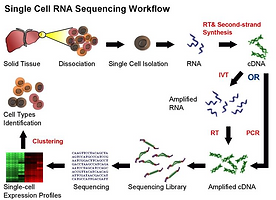 Sinle Cell Sequencing Service