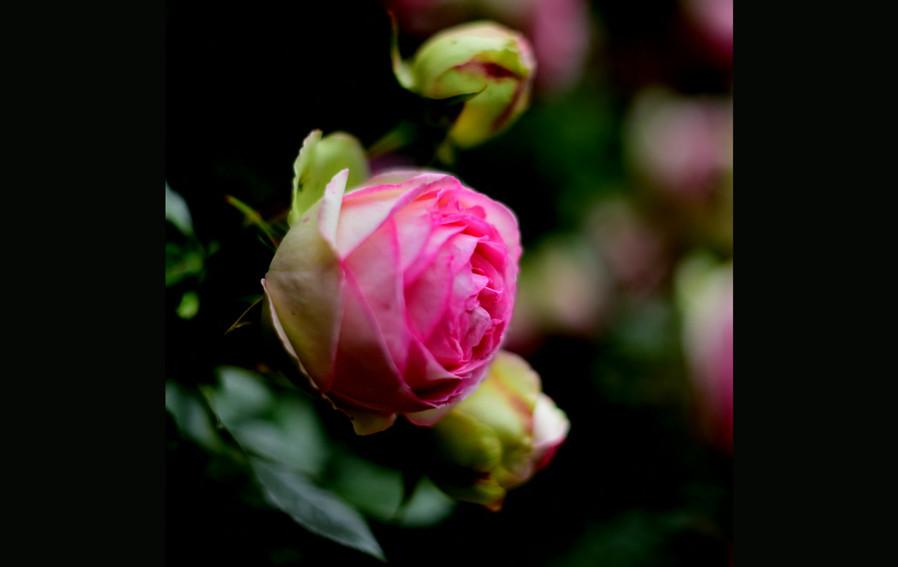 Fil rouge Fleur.mp4