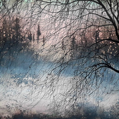 Willow winter dawn, ink on watercolour p